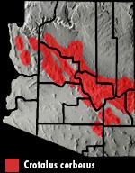 Arizona Black Rattlesnake (Crotalus cerberus) Arizona Range Map
