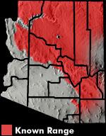 Plateau Fence Lizard (Sceloporus tristichus) Arizona Range Map