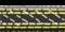 Striped Whipsnake